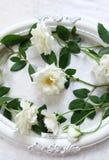 Beaux roses blanches, cadres de vintage et fond de velours Images stock