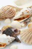 Beaux seashells contre photo stock
