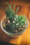 Beaux Succulents dans le bol en verre Images stock