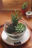 Beaux Succulents dans le bol en verre Photo stock