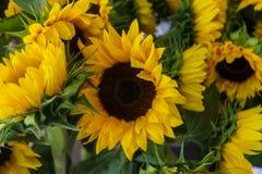 Beaux tournesols décoratifs utilisés pour faire des bouquets image libre de droits