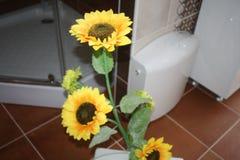 Beaux tournesols jaunes images stock