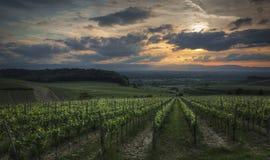 Beaux vignobles au coucher du soleil Images libres de droits