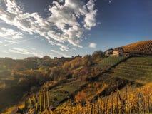 Beaux vignobles en Slovénie Photographie stock libre de droits
