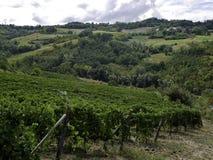 Beaux vignobles situés dans le secteur de timorasso dans Piémont photographie stock