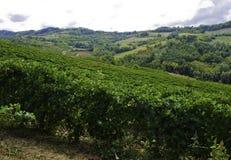 Beaux vignobles situés dans le secteur de timorasso dans Piémont photographie stock libre de droits