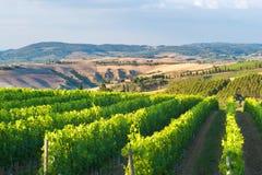Beaux vignobles sur les collines Photographie stock libre de droits