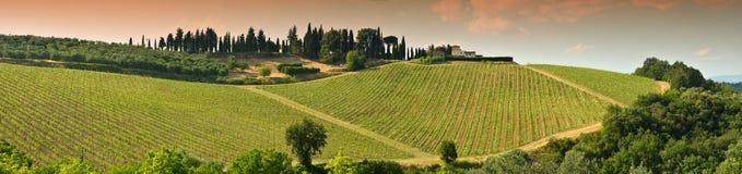 Beaux vignobles verts dans la région de chianti près de Mercatale Val di Pesa La Toscane en Italie photo libre de droits