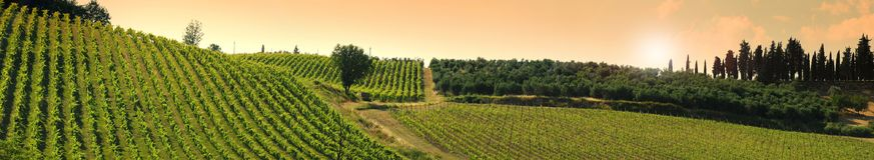 Beaux vignobles verts dans la région de chianti près de Mercatale Val di Pesa La Toscane en Italie images stock