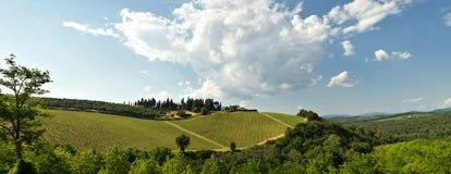 Beaux vignobles verts dans la région de chianti près de Mercatale Val di Pesa La Toscane en Italie photographie stock