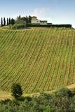 Beaux vignobles verts dans la région de chianti près de Mercatale Val di Pesa La Toscane en Italie image stock