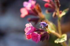 Beaux wildflowers colorés images stock