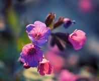 Beaux wildflowers colorés image libre de droits