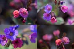 Beaux wildflowers colorés image stock