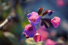Beaux wildflowers colorés photographie stock libre de droits