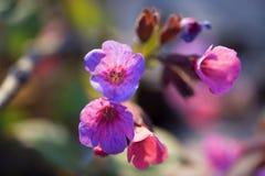 Beaux wildflowers colorés photos libres de droits
