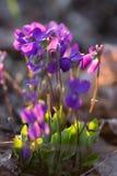 Beaux wildflowers colorés photos stock