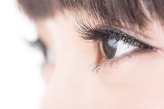 Beaux yeux de femme avec de longs cils Photographie stock libre de droits