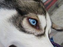 Beaux yeux le chien Image libre de droits