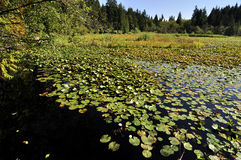 Beaver湖在斯坦利公园 库存图片