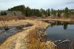 beaver пруды Стоковые Фотографии RF