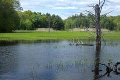 Beaver пруд с мертвым деревом в Хевроне, Коннектикуте Стоковые Фото