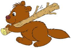 Beaver. The smiling brown beaver carries the tree branch Royalty Free Stock Photography