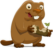 Beaver. The beaver with a wood piece Royalty Free Stock Photography