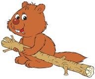Beaver Royalty Free Stock Photography