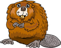 Beaver animal cartoon illustration Royalty Free Stock Images