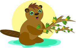 Beaver and a Branch Royalty Free Stock Photos