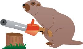 Beaver with chainsaw Stock Photo
