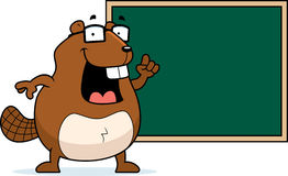 Beaver Chalkboard Stock Images