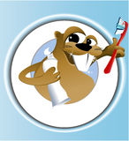Beaver cleaning teeth Stock Photography
