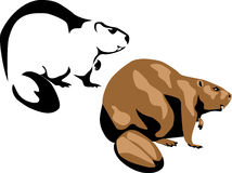 Beaver. Color and black illustration Royalty Free Stock Photos