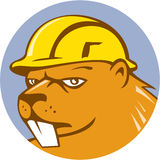 Beaver Construction Worker Circle Cartoon. Illustration of a beaver construction worker wearing hard hat set inside circle on isolated background done in cartoon Stock Image