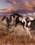 Beaver Creek Run-Vert. Three paint horses run through a majestic Arizona landscape Royalty Free Stock Photos