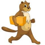 Beaver CREES Stock Photos