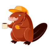 Beaver and the cup of coffee Royalty Free Stock Photography