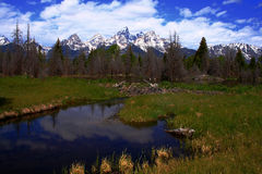 Beaver Dam. Contructed on pond beneath the Teton's Stock Images