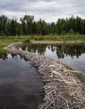 Beaver Dam  in the Grand Tetons Stock Images