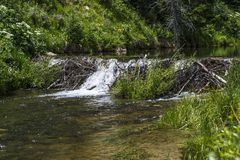 Beaver Dam on Huntington Creek in Emery County Utah Royalty Free Stock Photography