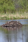 Beaver dam Stock Photos