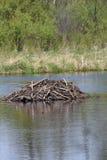 Beaver dam Stock Photos