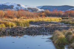 Beaver dam on North Platte River Stock Photo