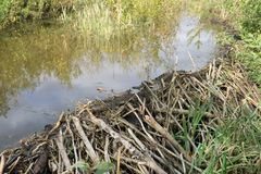 Beaver Dam and pond, the Eastern part . stock image