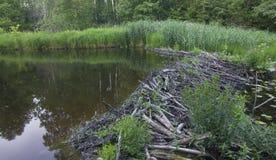 Beaver dam Royalty Free Stock Photo