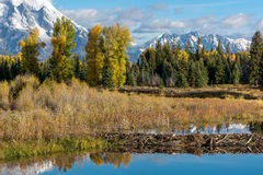 Beaver Dam at Schwabachers Landing Royalty Free Stock Photography
