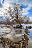 Beaver dam on a small river. Winter day Stock Photos