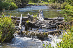 Beaver dam on stream. The beaver dam is constructed of logs and twigs to raise the water level Royalty Free Stock Images